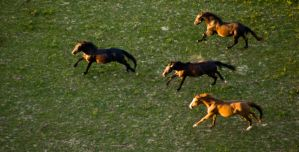 Horses on the meadow 2 by archaeopteryx-stocks