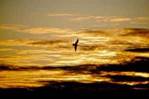 Birds in the sky by Mordes