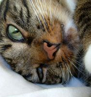 Frankie's Furry Face by Soniafm1027