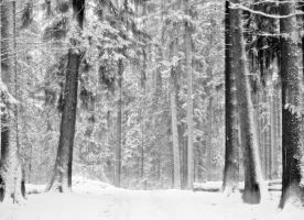 winter forest by a-b-n