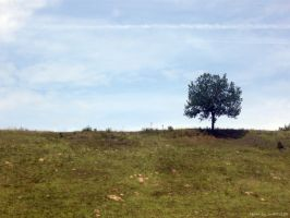 Lonely Tree 1 by Iulia-Oprinesc