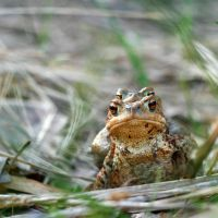 Toad by Z740