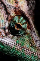 Chameleon 2 by SampleOfSoul