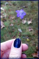 Blue Flower by cordria