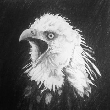 The Eagle's Call by line-raptor