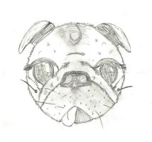 pugsketch1 by check-out