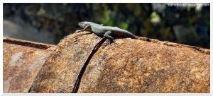 salamander on top by acoresjo88