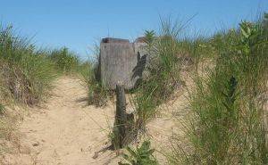 Plank at the dunes 2 by Salgor