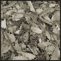 Oak and Pine Litter by neubauten