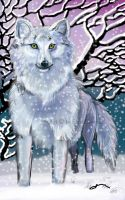 Arctic Wolf by Shadowind