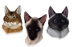 ..: Three Cats - Commission :.. by Freewolf7