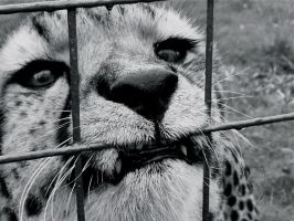 Caged by InsertNaffNameHere