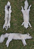 Marble cross fox by FoxyCreations