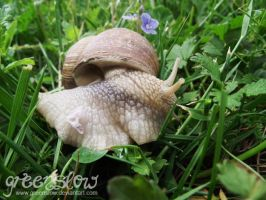 well, snail by GreenSlOw