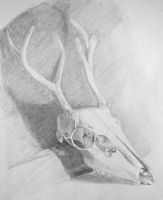 WIP-2- Drawing of a Skull by stories-in-paper