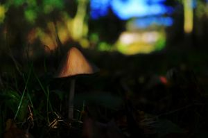 Lonely Mushroom by mattconnect