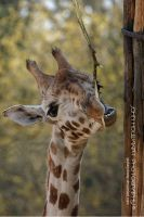 Toothpick by guitarjohnny