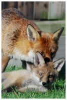Mother and cub by Pidgel