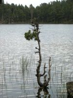 Flooded Little Old Tree by AdMalamCrucem