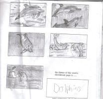 Dolphin Sketches by Mel-at-ne