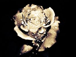 Rose My Immortal by POE-R7