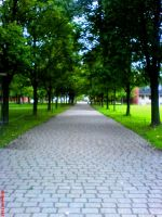 Road_university by Rhopalocera