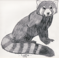 Red Panda by Leeliothestica