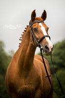 Scalette by cavallostock