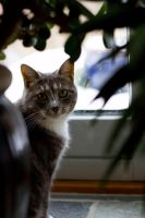 Mitti the cat by the window by CathexisDk