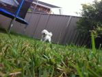 Puppy in the grass by danipapa