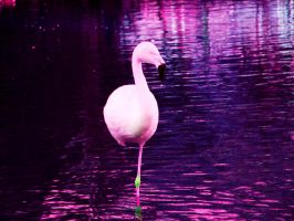 Painted Pink by SweetSoliloquy