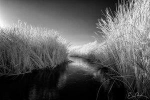 Through the Reeds by eprowe
