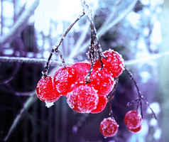 Frozen red balls by Banjis