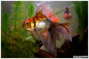 Fish by nithilien