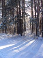winter is awesome by branka42