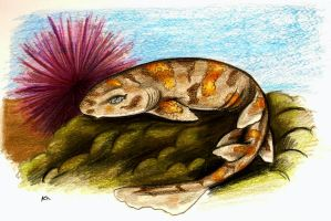 Puffadder Shyshark by killer-rabbit-05