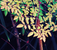 Leaves 3 by Humble-Novice