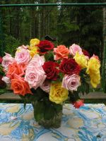 Roses by pekauppi
