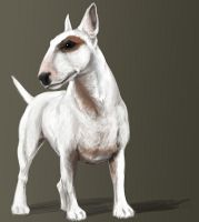 Bullterrier by KeyHof