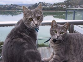 Cats and a Harbour by God-KingTaupo
