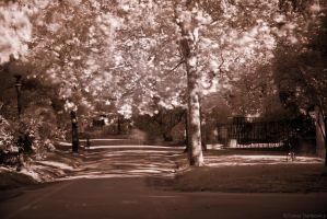 first infrared by tomastankiewicz