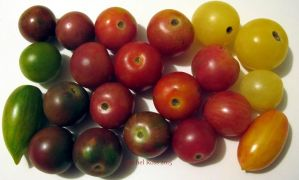 Cherry Tomatoes by NycterisA
