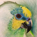 Parrot by forelb