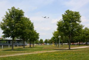Tree rows and plane by ZCochrane