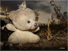 lonely bear by chrisstina