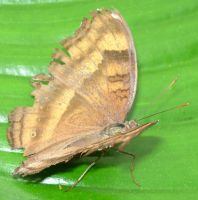 395 - butterfly by WolfC-Stock
