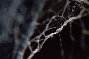 Tangled web 3 by mpw3d