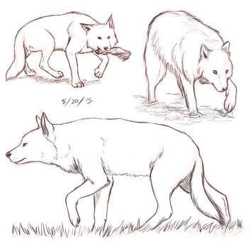 5-30-15 Wolf Sketches by SailingBreezes