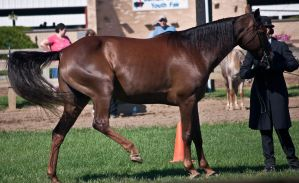 Showmanship 12 by erl-stock
