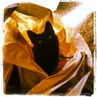 Jetta's Fortress of Solitude by copper9lives